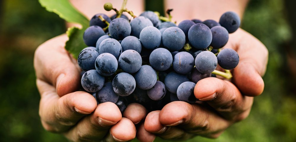 How Resveratrol, Feature of Red Wine, Works to Fight Bacteria-linked Lung Inflammation Detailed in Study